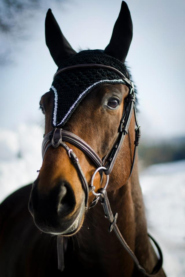 långa huvor häst
