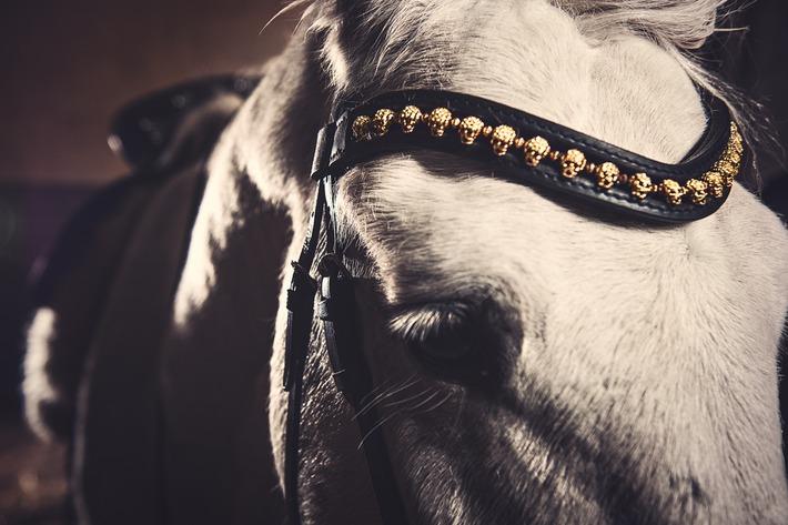 exklusiva pannband häst
