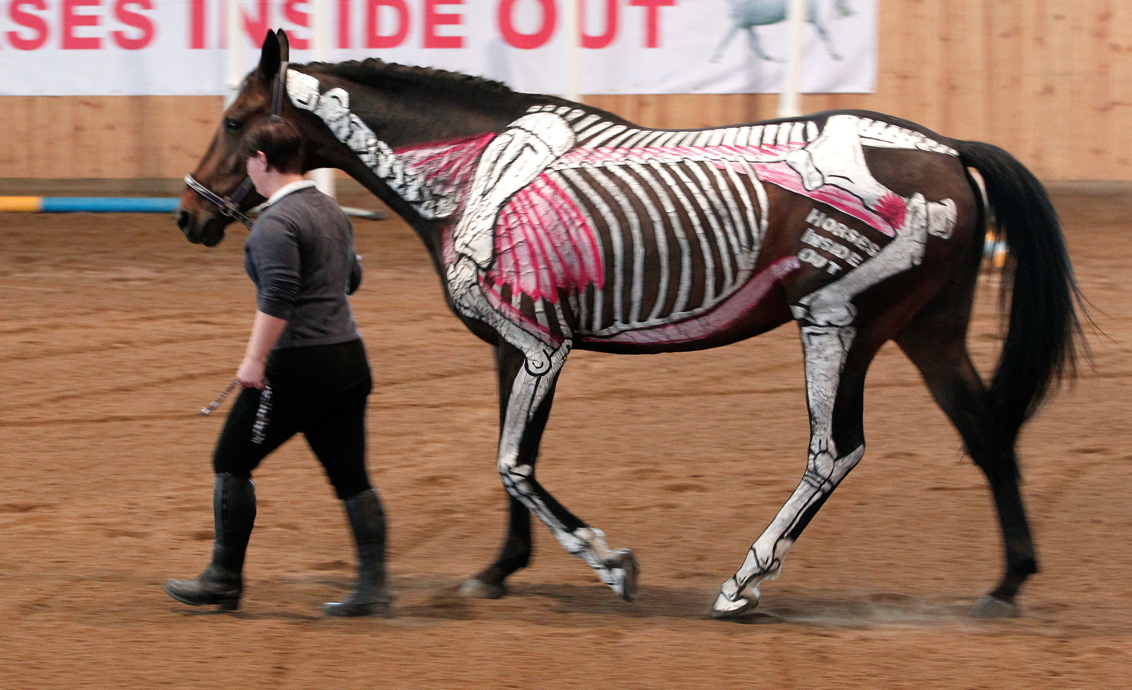 bygga ryggmuskler på häst