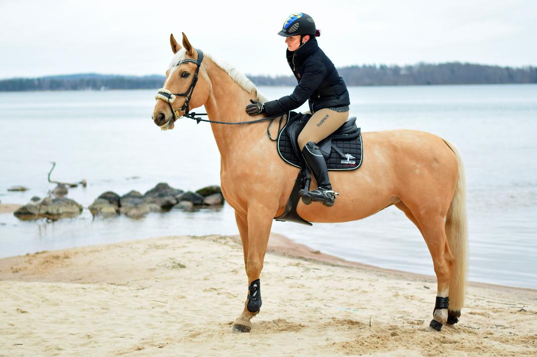 häst med ryttare