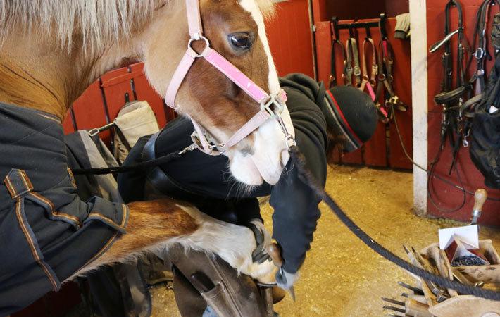 matolja till häst