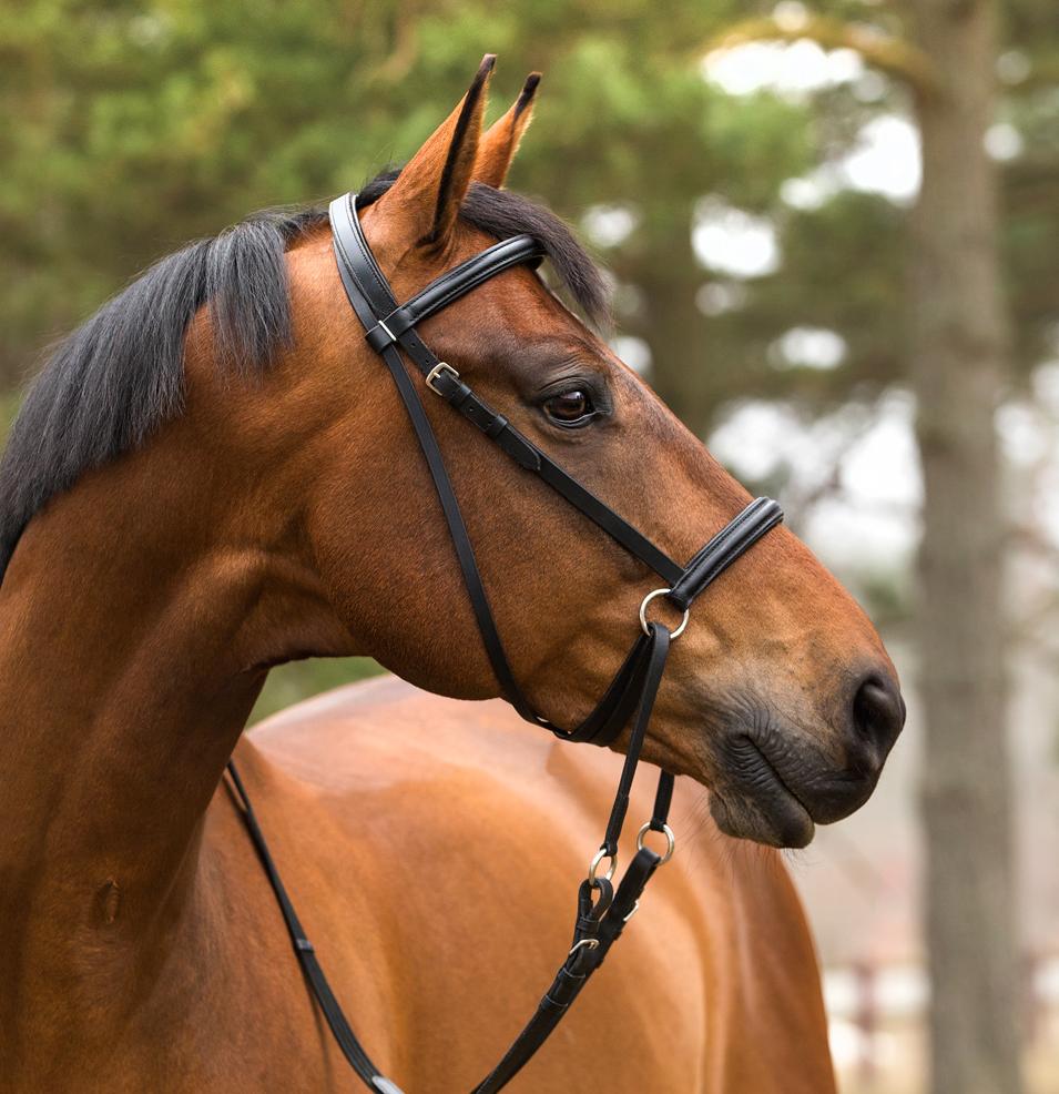 bettlöst träns ponny