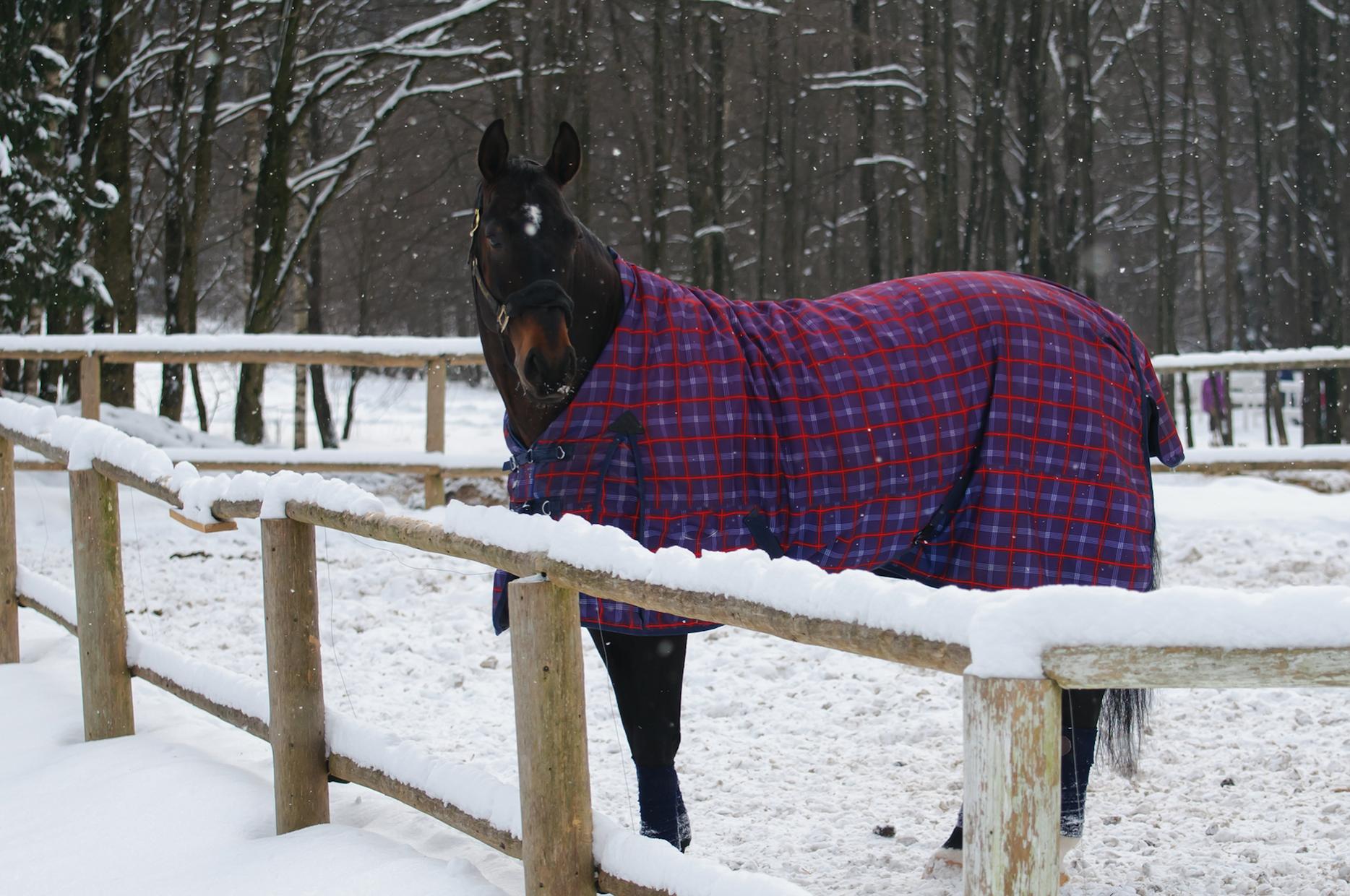 täcke storlek till häst