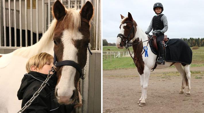 Halvblodet som har en ponny till mamma