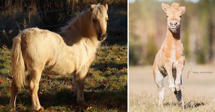 min lilla ponny dating hem sida