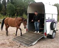Lasta häst på transport