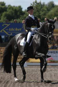 Isidor hopp for svensk dressyr