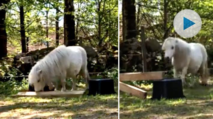 stor svart flicka åsnor