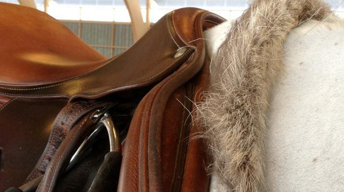 renskinn till häst