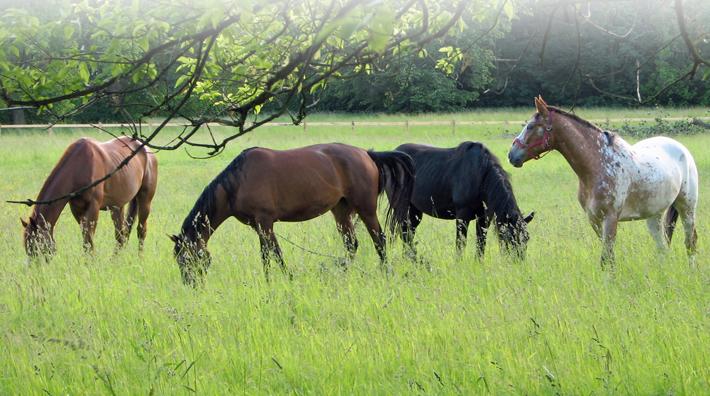bra protein till häst