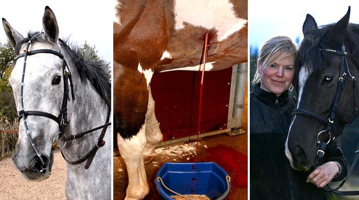 allergi hos häst
