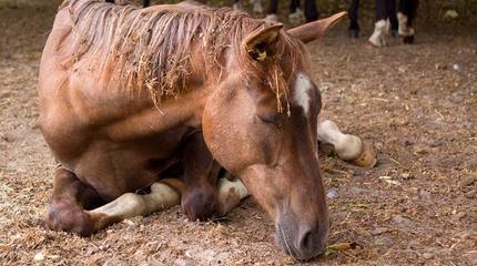 paraffinolja häst köpa